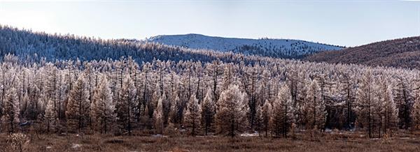 겨울 몽골의 타이가 숲 모습