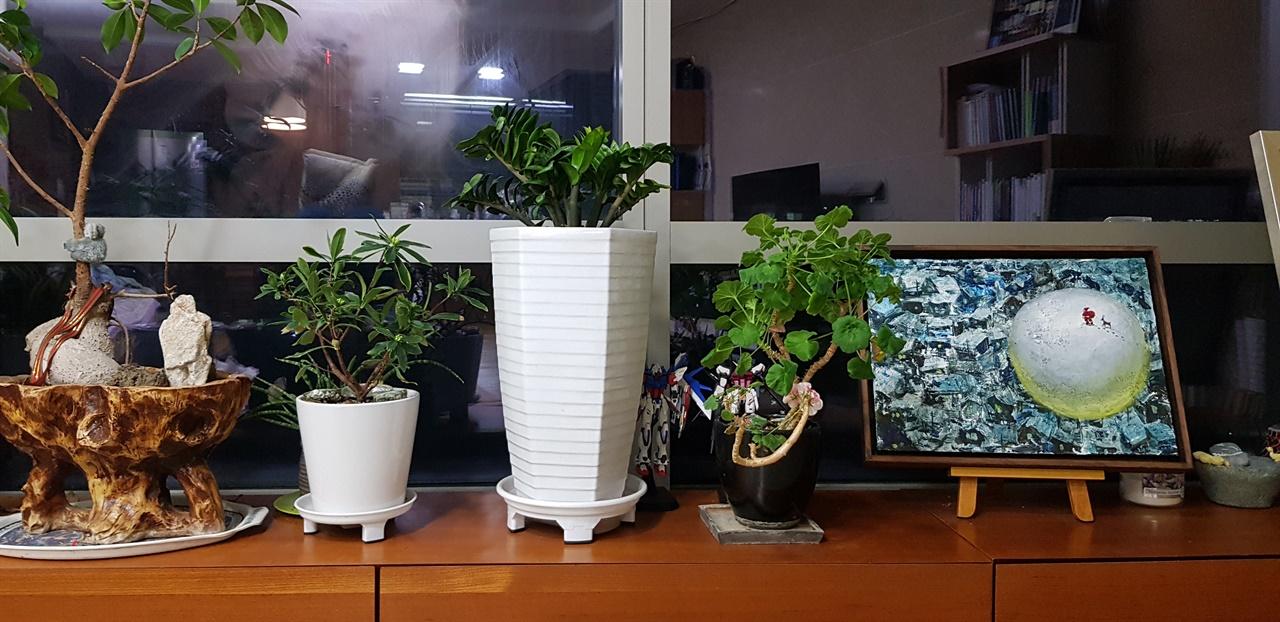 거실에 놓인 화분들
