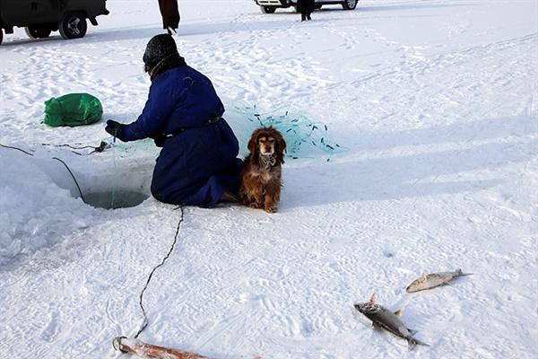 1m이상 얼어붙은 차강노르 호수에서 고기를 잡는 어부가 얼음위에 고기를 던지자 2분도 안되어 얼어버렸다.