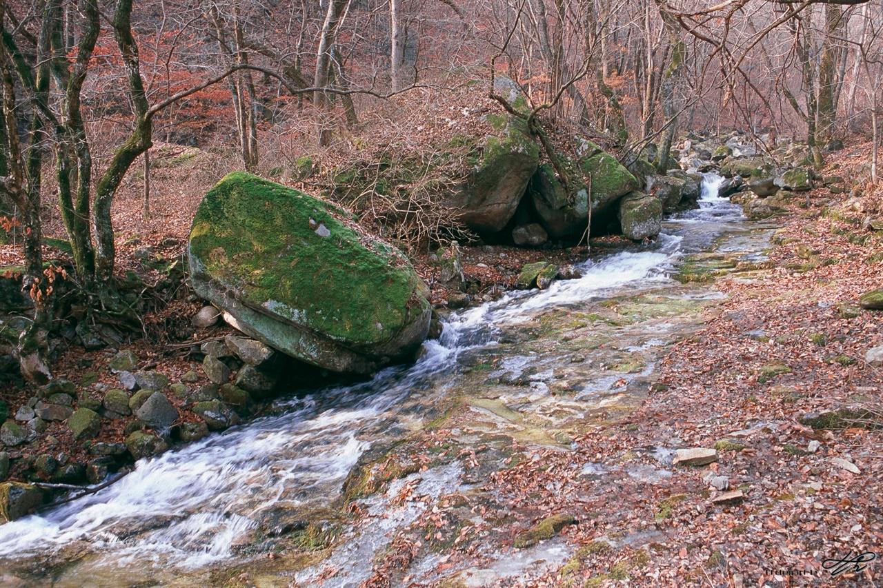 청평사 계곡 (Contax S2/RDP3)한겨울에도 싱그러운 녹색빛의 이끼가 바위 위에 부드럽게 깔려있다