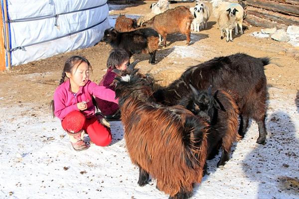 이웃도 없는 유목민 어린이의 친구는 동물들이다. 염소를 쓰다듬어주는 어린이 모습