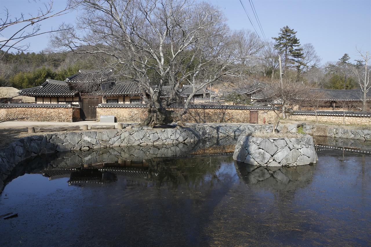보성 강골마을 이진래 고택 앞의 연못. 연못에 물수세미가 가득 차 있다.
