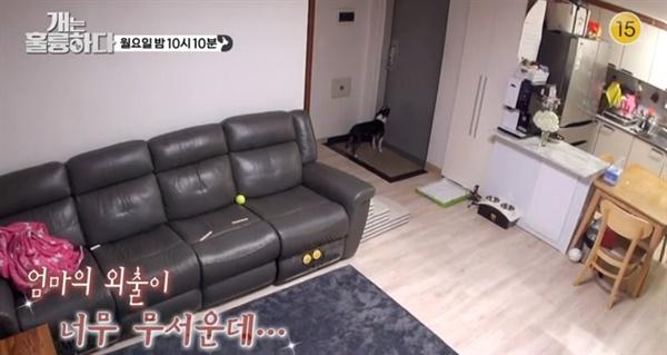 지난 17일 방송된 KBS2 <개는 훌륭하다>에는 '분리불안' 증세를 보이는 반려견 순철이와 그로 인해 어려움을 겪고 있는 보호자 가족이 출연했다.