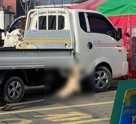 제보자 A씨는 해당 트럭 운전자가 개를 트럭에 매단 채로 달렸다고 주장했다.