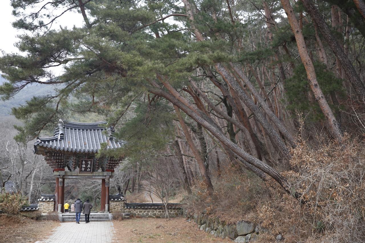 지리산 천은사 일주문과 어우러진 소나무. 소나무는 단순한 나무라기보다 우리와 함께 해온 '한국인의 나무'다.