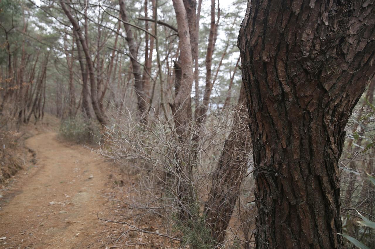 천은사를 둘러싸고 있는 소나무 숲길. 호젓한 숲길이 일상의 근심을 금세 털어내 준다.