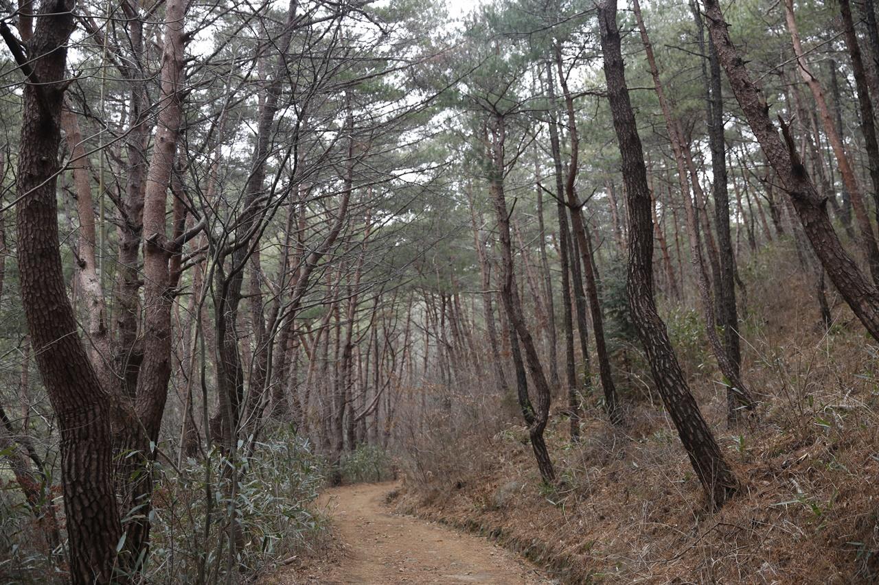천은사 소나무 숲길. 요즘 보기 드문 소나무로 숲을 이루고 있다. 참 귀한 소나무 숲이고, 숲길이다.
