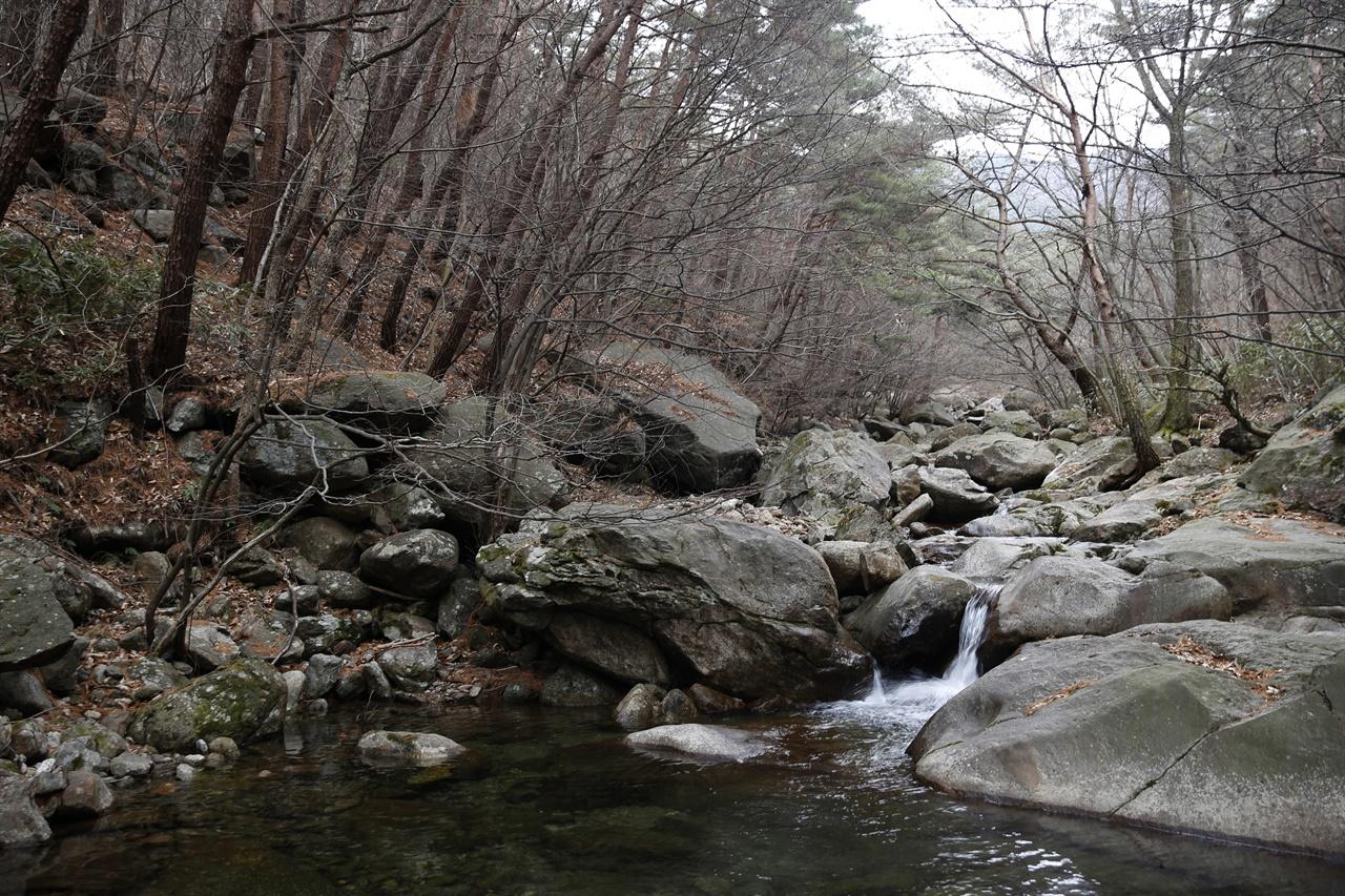 봄 기운을 머금은 천은사 계곡. 계곡의 물이 소나무 숲을 가로질러 천은사로 흘러 내려간다.