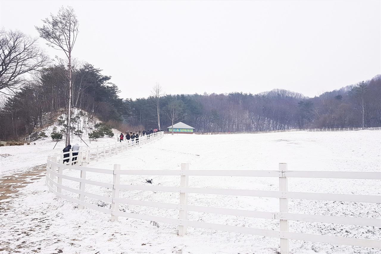 대관령 하늘목장의 4월 초 모습. 대관령은 4월에도 눈이 내린다. 다음 주말에도 눈 예보가 있을 정도이다.