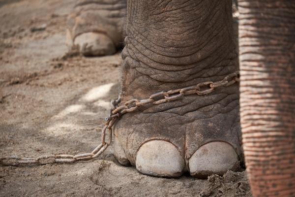 사회생활을 하고, 인생을 살아봐서 다 안다고 말하는 아빠를 설득할 자신이 없었다. '아기 코끼리를 쇠사슬에 묶어놓으면 나중에 몸집이 커져도 쇠사슬을 뽑을 생각을 하지 못한다'고 한다. 나는 아기 코끼리였다.