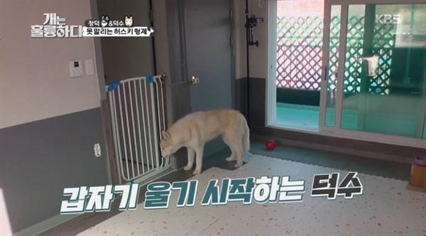 지난 24일 방송된 KBS <개는 훌륭하다>의 한 장면