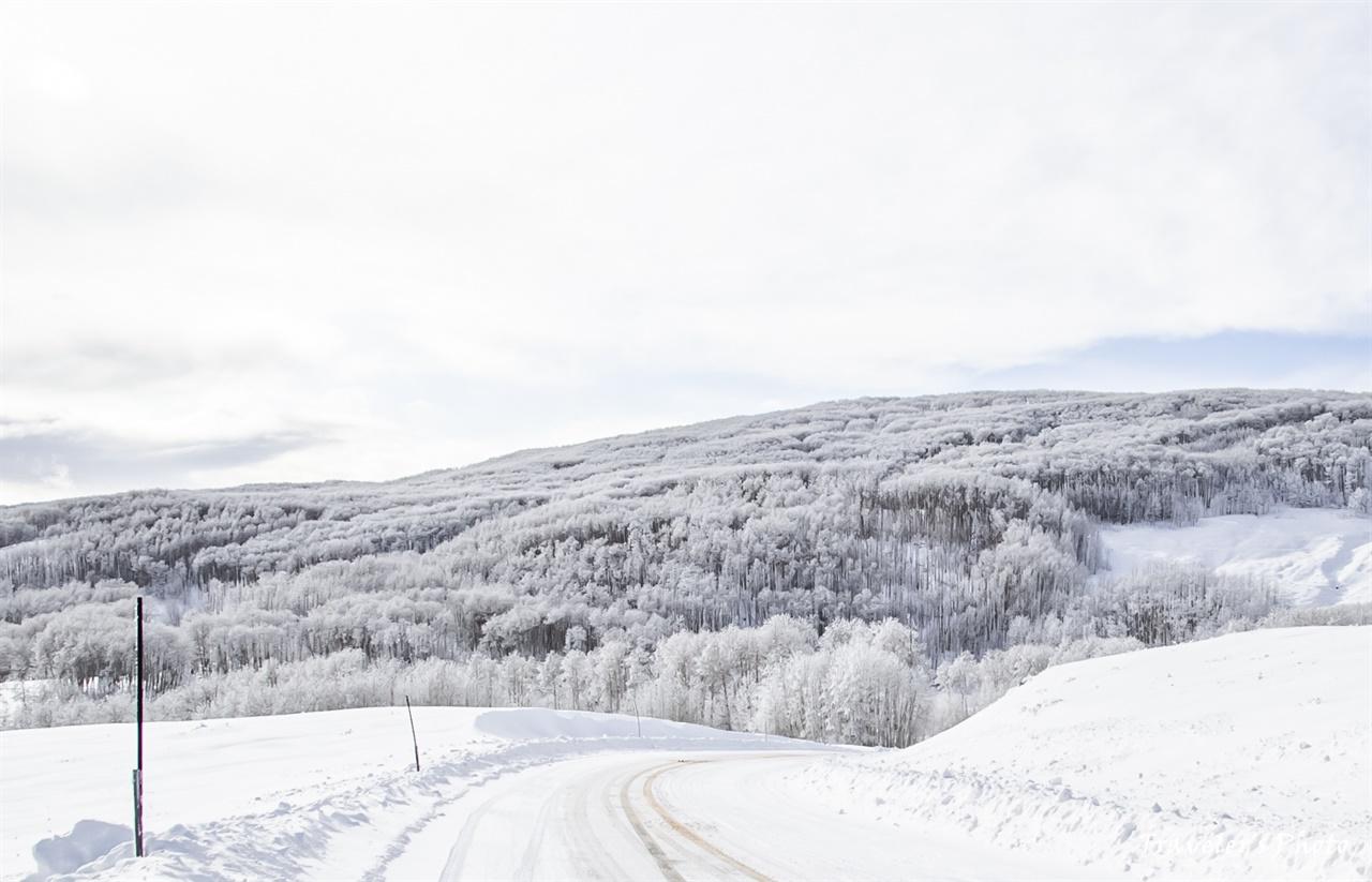 아스펜 숲에 내린 눈은 다른 곳 보다 더 아름다워 보인다
