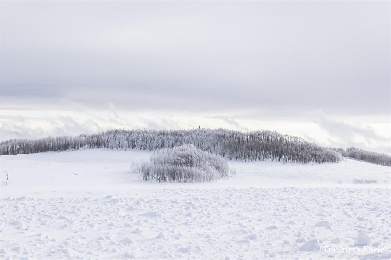 아스펜 군락이 보여주는 특이한 설경, 그저 아름답다