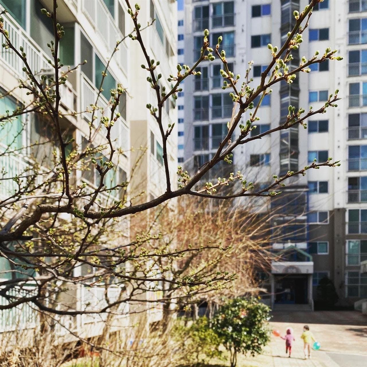 놀이터로 뛰어가는 아이들 뒤로 나무들은 성실하게 봄을 준비한다.