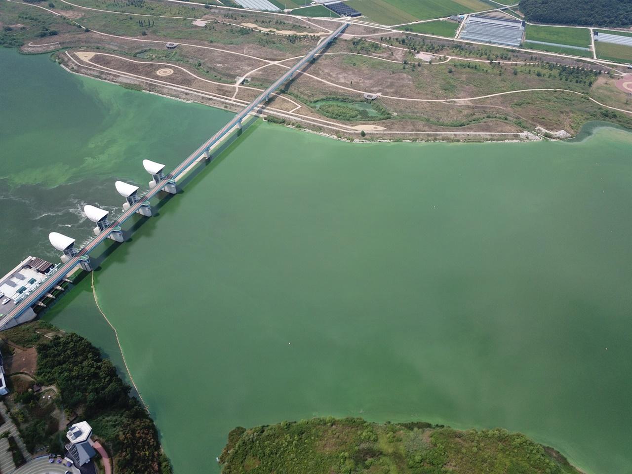 4대강 사업으로 금강에서는 3개의 보가 만들어졌습니다. 2018년 1월부터 세종보, 공주보 수문은 열렸지만, 하류 백제보의 수문은 닫혀 있습니다. 백제보의 영향을 받은 곳에서는 강 전역에 녹조가 발생하고 있습니다.