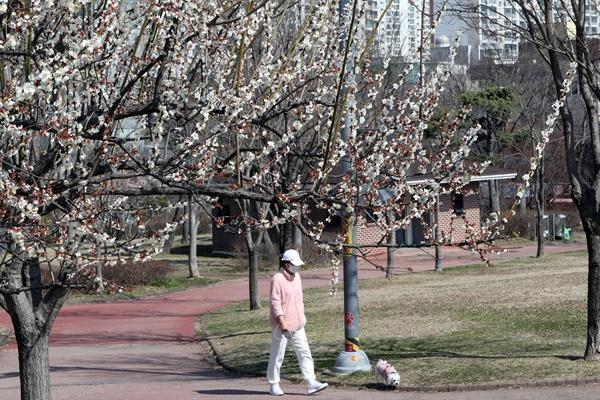 8일 광주 서구 쌍촌동 5·18기념공원에서 마스크 쓰고 산책하는 시민 주위에 벚꽃이 피어 있다.