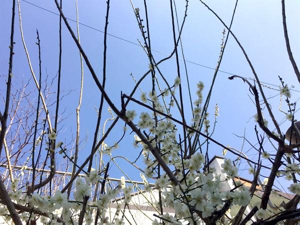 동네 골목길 일상 풍경 그럼에도 봄이 왔고 봄꽃도 핀다.