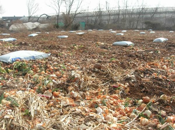 밭 만들기 퇴비와 낙엽,작물의 잔사등의 유기물을 흙속으로 넣어준다