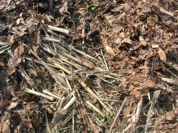 수숫대와 낙엽 흙에서 생성된 유기물은 흙으로 다시 돌려준다