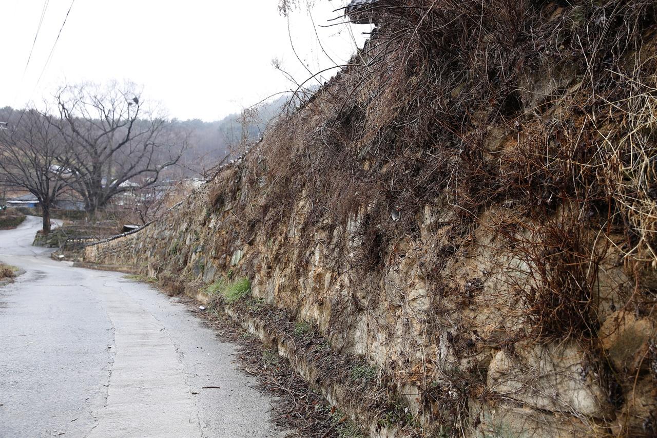 봄비가 내리는 계월마을의 돌담. 세월의 무게가 고스란히 묻어난다.