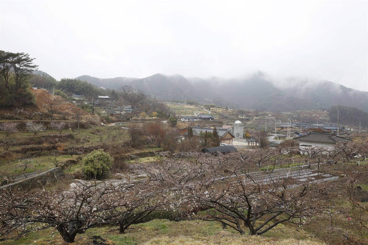 봄비가 내리는 날의 계월마을 모습. 이택종 선생이 심은 매실나무 앞에서 내려다 본 풍경이다.