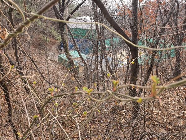봄의소식을 알리는 꽃망울