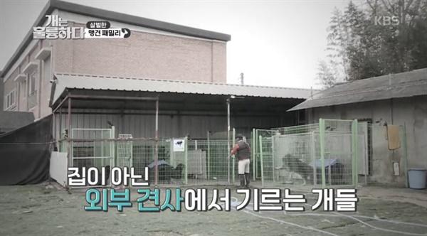 16일 방송된 KBS <개는 훌륭하다>의 한 장면