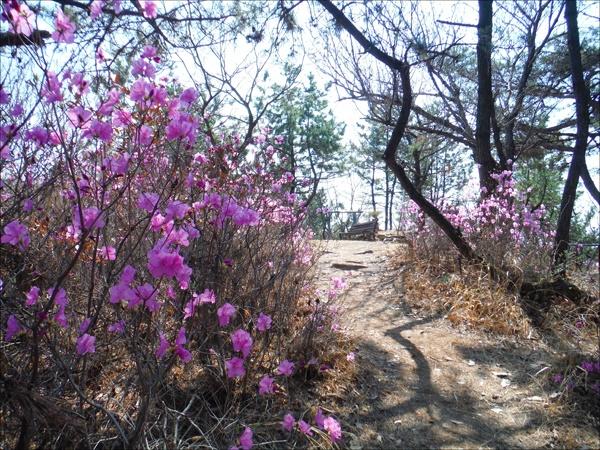 연분홍으로 물드는 봄이면 청량산은 참 이쁘다.