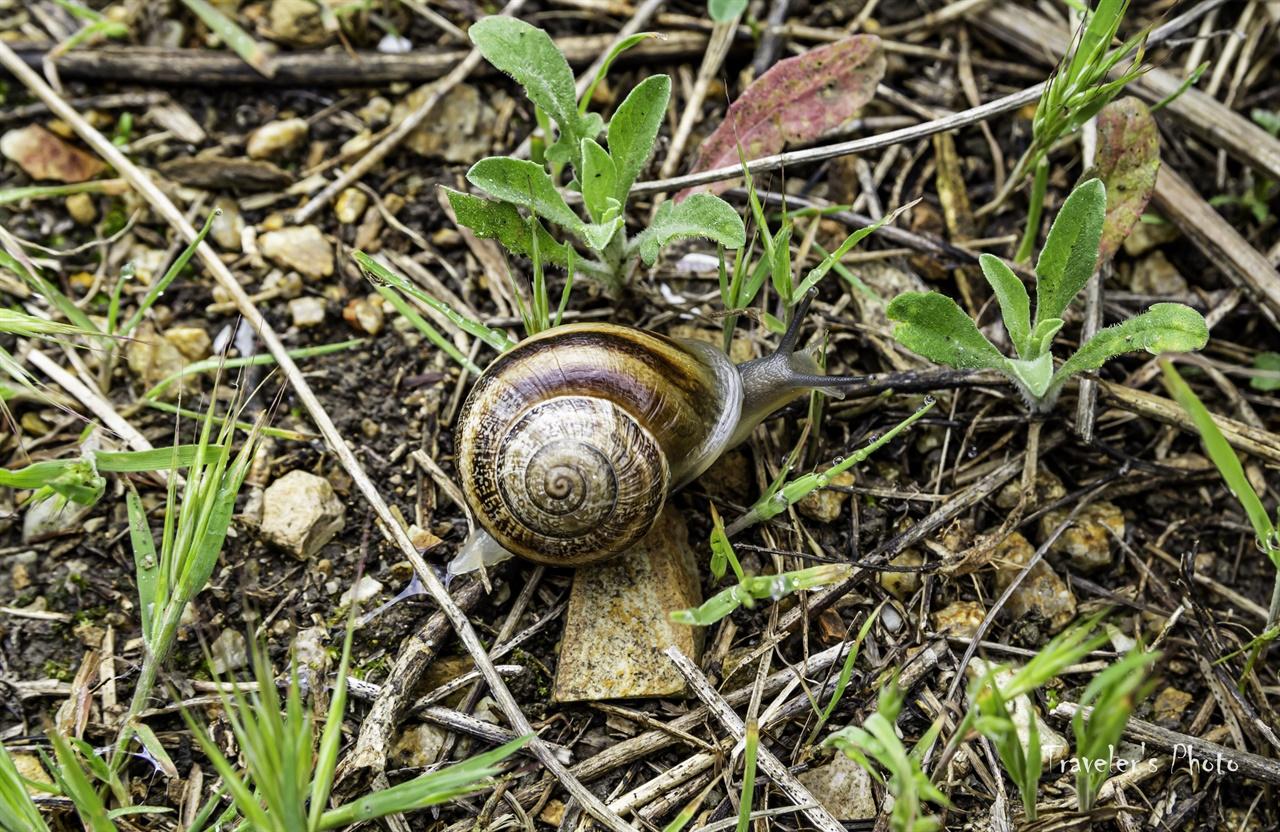 달팽이의 봄 땅이 촉촉해지자 달팽이도 봄나들이를 나섰다.