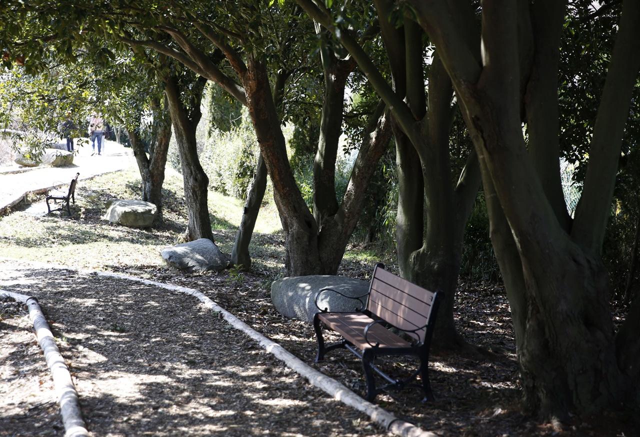 전남산림자원연구소의 붉가시나무 그늘. 아래에 나무의자가 놓여 있다.
