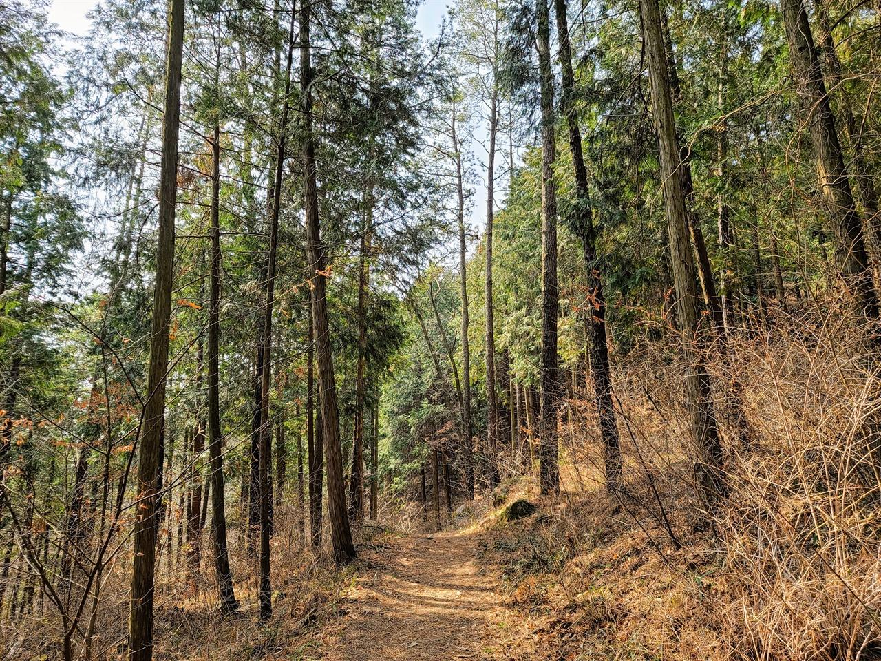 몸과 마음을 치유할 수 있는 편백나무숲