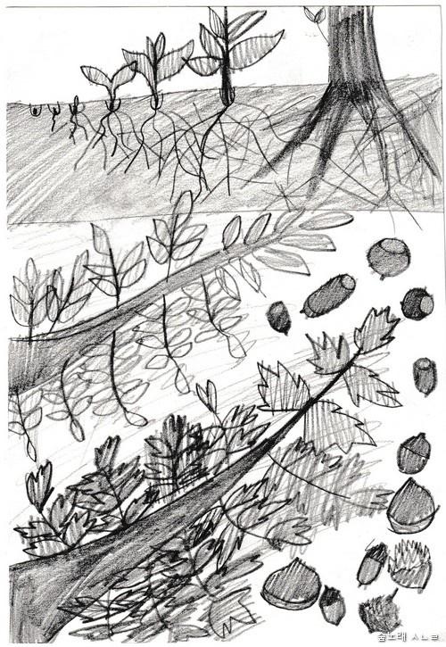 열세 살 사름벼리 어린이가 그린 '수수께끼 그림'/ 무엇일까요?