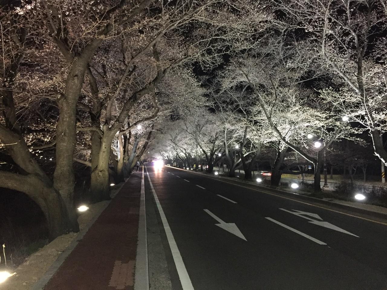 경주 흥무로 벚꽃길 야간경관조명 모습