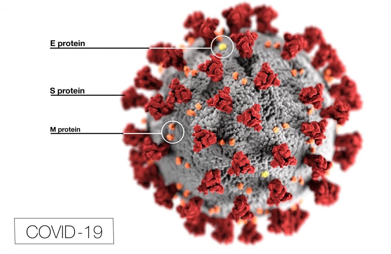 코로나19 바이러스의 구조 모형. 바이러스 표면의 돌기처럼 보이는 부위에 위치한 S단백질(S protein)은 인체 세포로 바이러스 유전물질을 침입시키는데 결정적인 역할을 한다.