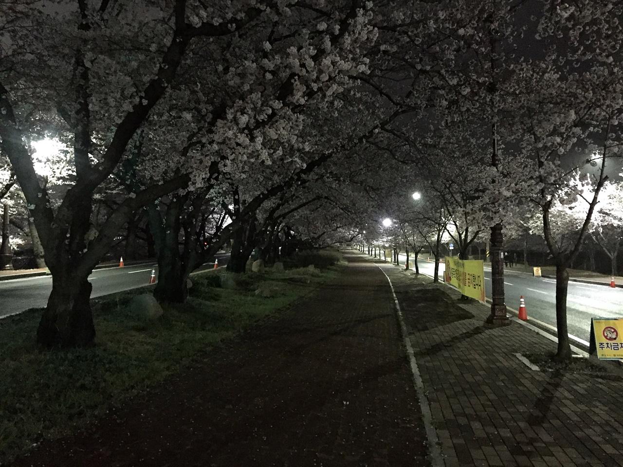27일 밤, 벚꽃 상춘객이 몰릴 것에  대비해 미리 불을 껀 '경주 흥무로 벚꽃길' 모습