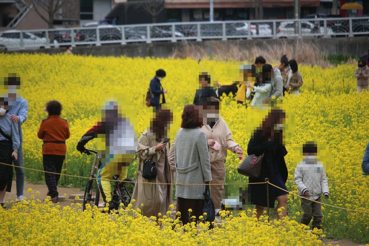 대구 인근공원에 몰린 사람들 대구 인근 공원에 유채꽃을 보러온 시민들의 모습