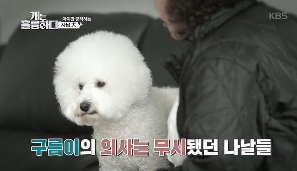 30일 방송된 KBS2 <개는 훌륭하다>에 고민견으로 등장한 구름이.