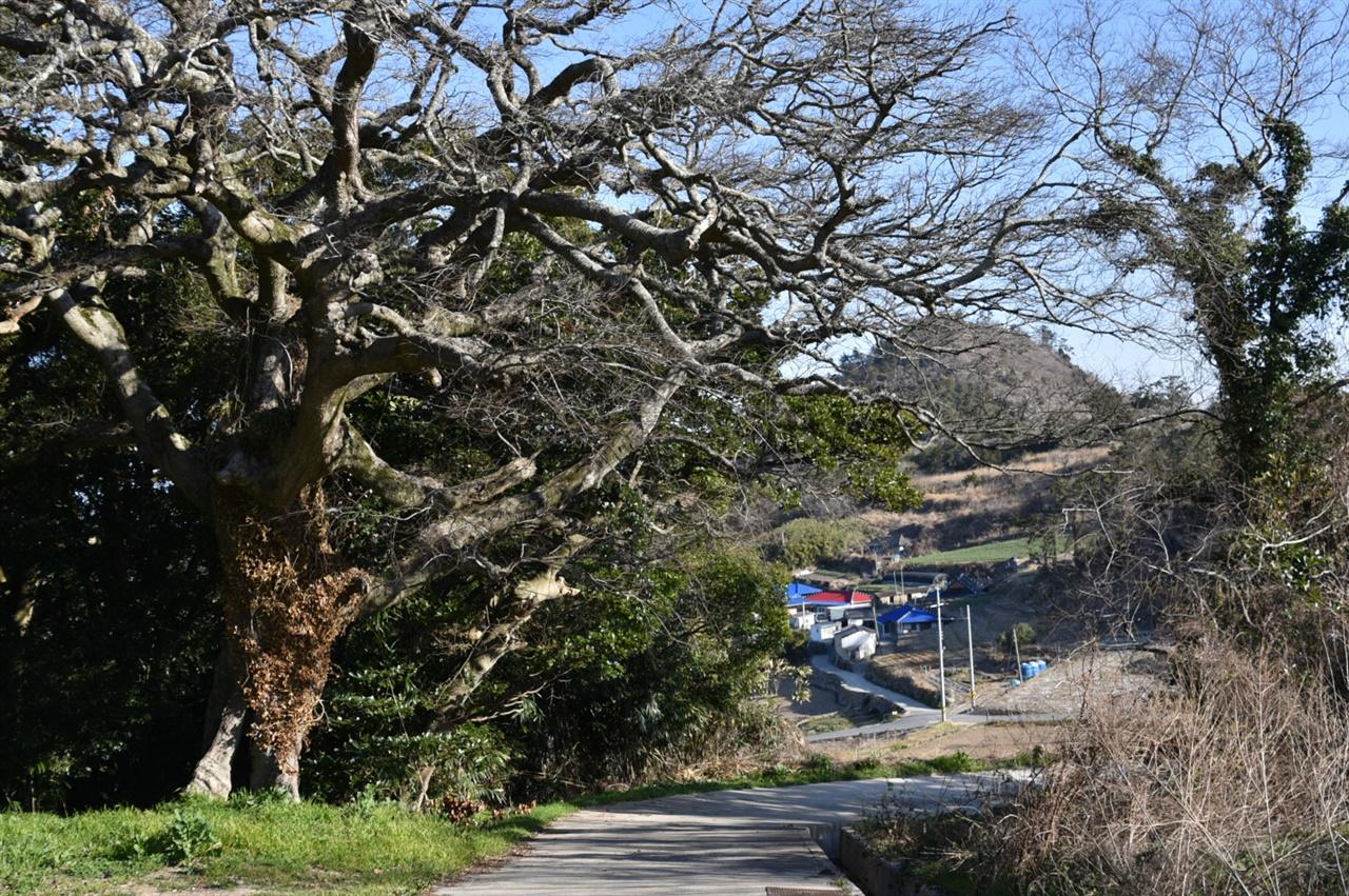 수령이 오래된 팽나무와 상록수림이 우거진 옥도 남쪽의 짓제산에서 내려다 보는 '놀자리'마을