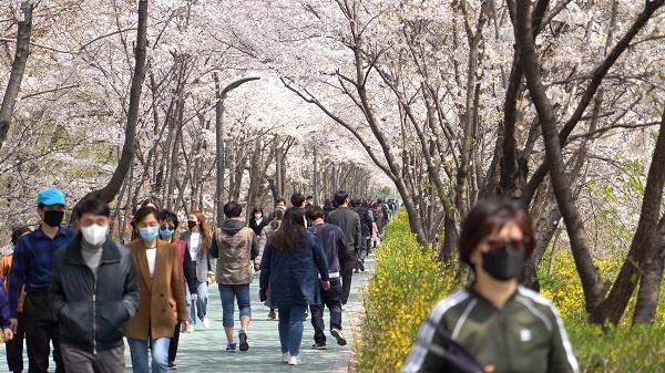 점심시간이 되자 마스크를 쓴 채 양재천 벚꽃을 구경하려 나온 인파로 붐볐다.
