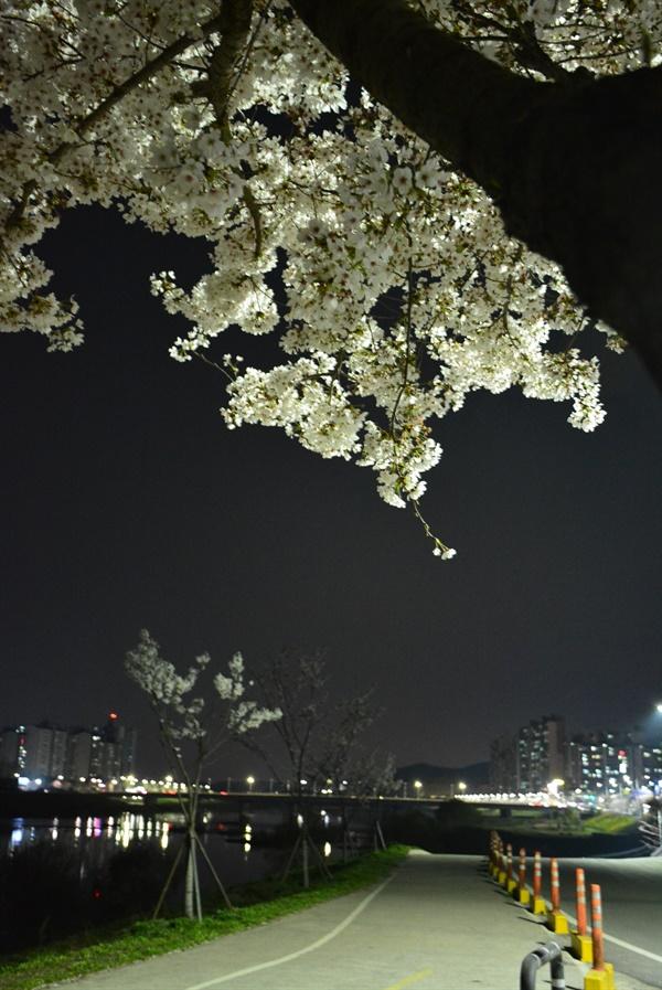 경북 경산시의 벚꽃 핀 자전거 도로