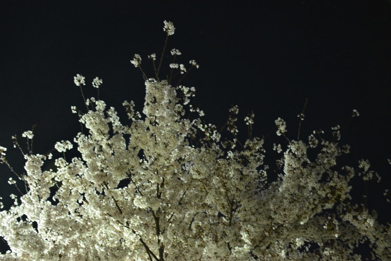 벚꽃이 흩어진 밤 하늘