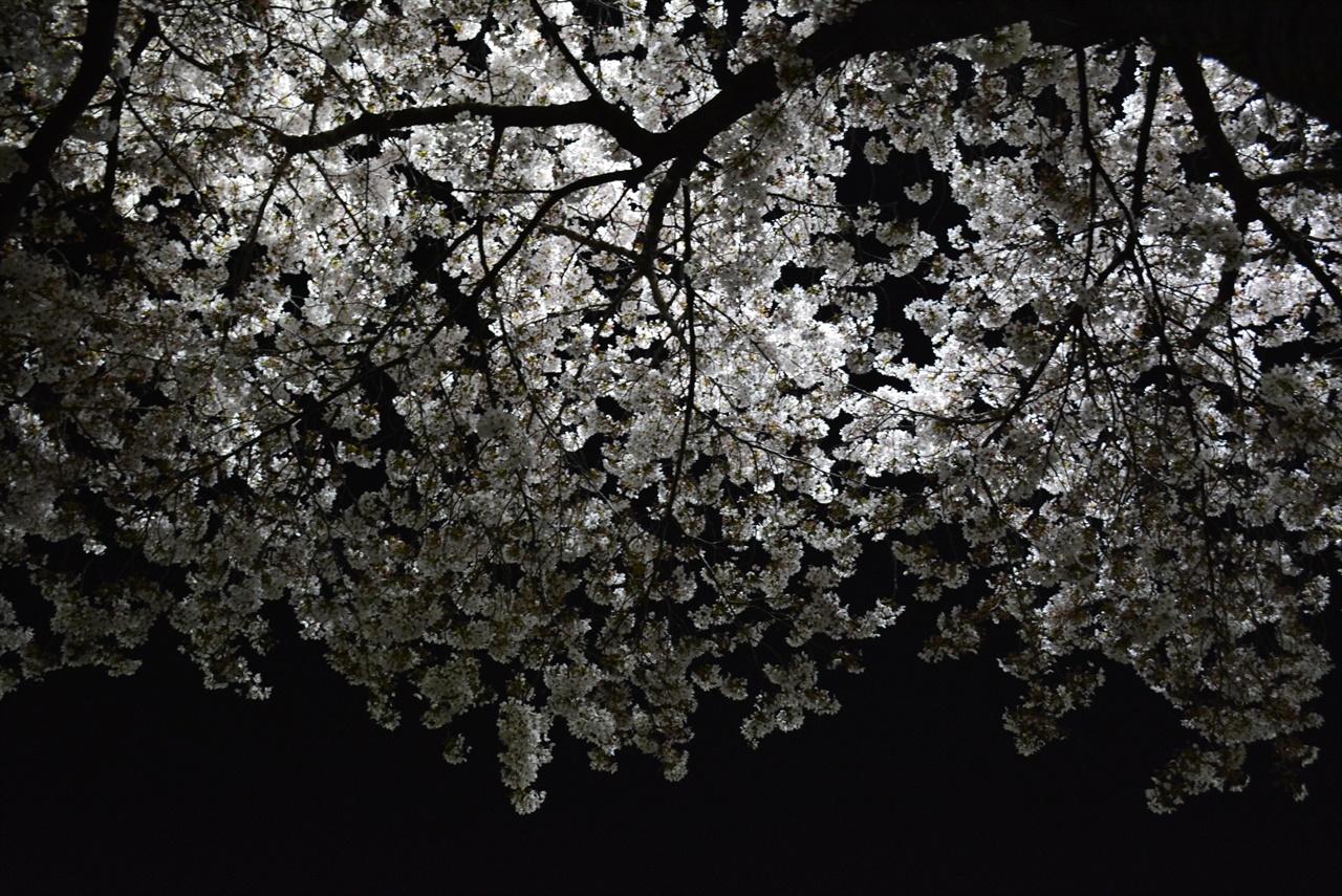 밤은 창고이고 벚꽃나무는 우수수 떨어지는 먼지털이같다