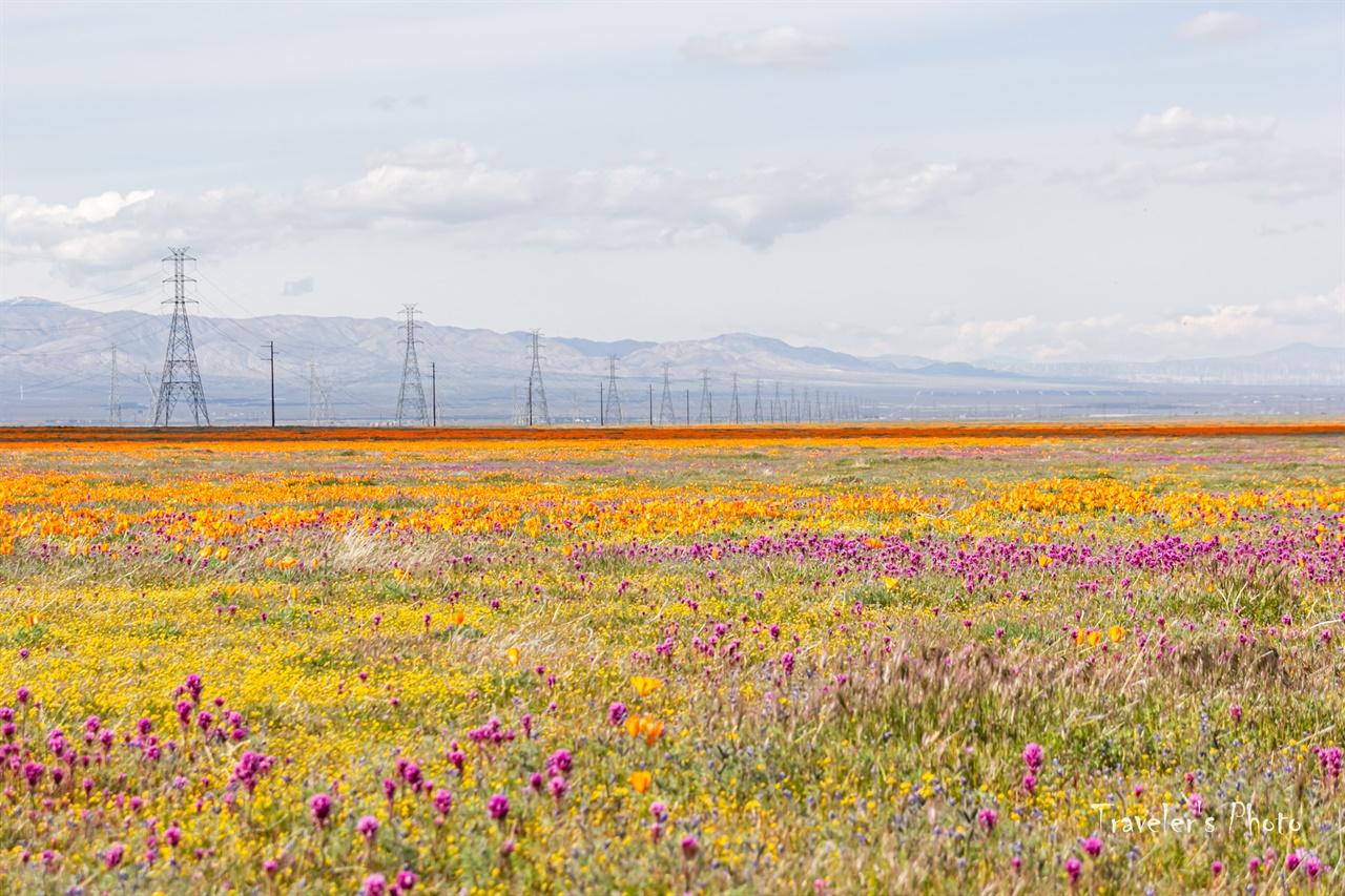 생명은 가둘 수 없다 보호구역 밖에서 흐드러진 들꽃 무리들
