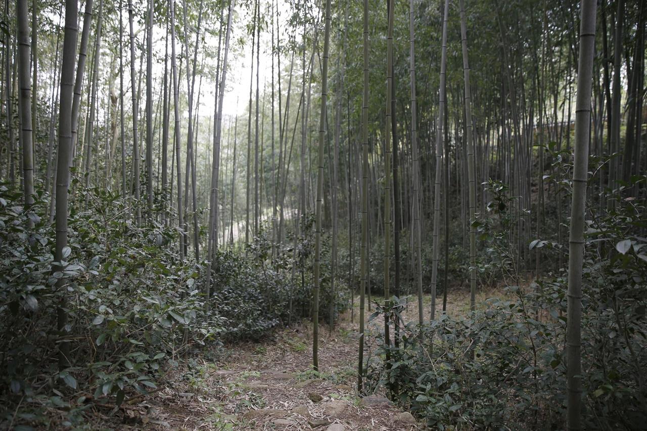 강진 백운동정원이 품고 있는 대숲 산책길. 코로나19로부터 벗어나 마스크를 벗고 심호흡을 하며 편안하게 쉴 수 있는 정원이다.