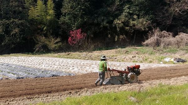 광주 교외의 한 농부가  밭갈이를 시작으로 봄 농사를 준비하고 있습니다