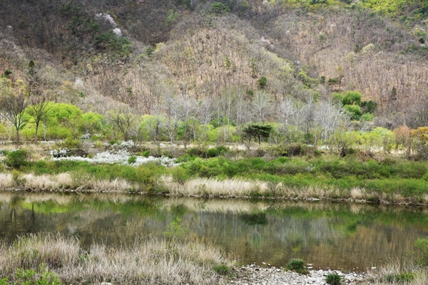 강가에 물오른 나무