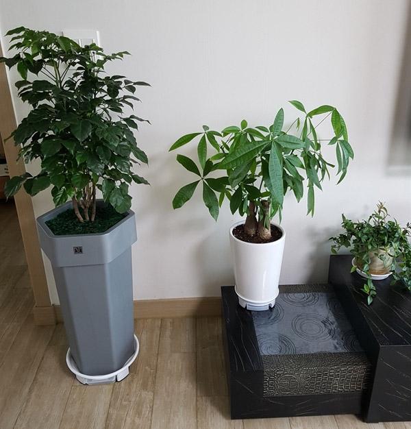 거실에 식물을 들여와 키운다