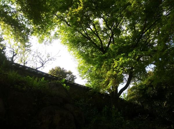자연은 늘 그 자리에서 묵묵히 최선을 다해 피고 진다. 어느 때고 아름다운 이유가 아닐런지.