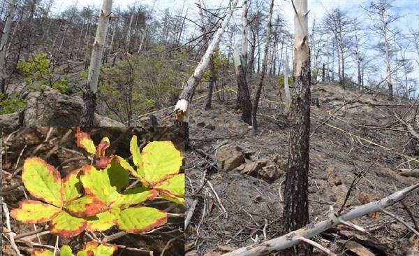 석포제련소 주변의 산림고사. 나무가 집단고사하고 활엽수 잎이 변색되어 말라가고 있다.