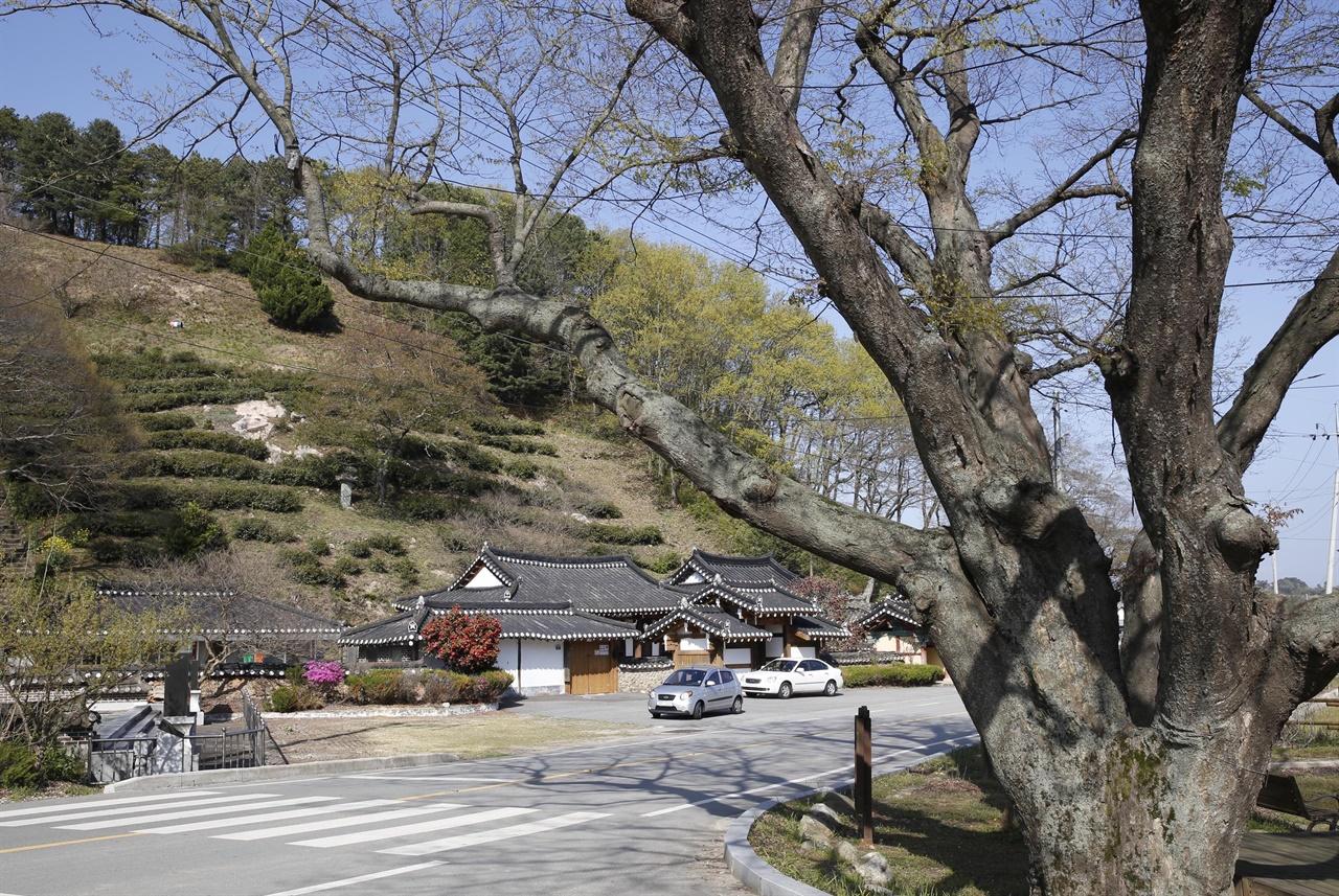 봄햇살에 연둣빛 이파리가 돋아나고 있는 모평마을의 나무들. 그 뒤로 임천정사와 차밭이 보인다.